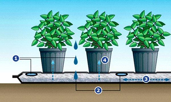 Delightful Il Processo Di Irrigazione: